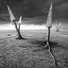 Buy Sawland, Black and white photograph (giclée) by Dariusz Klimczak on Artfinder. Discover thousands of other original paintings, prints, sculptures and photography from independent artists.