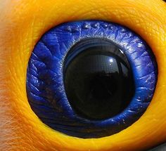 The eye of a Tucan. WoW!!!