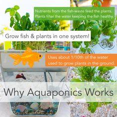 Aquaponics: Why It Works!
