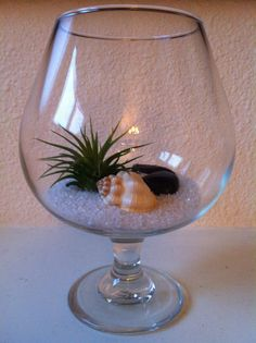 DIY Terrarium Miniature Garden: Air plant, decorative sand (comes in many colors) sea shell, river rocks and any decorative glass. I used a brandy snifter here. Spray and mist air plant daily or soak in water once a week.