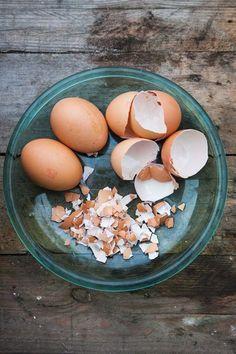 Rozdrcené vaječné skořápky nasypte na záhonky, kde nechcete slimáky Green Onions Growing, Growing Greens, Eggs, Gardening, Breakfast, Food, Houses, Growing Up, Plants