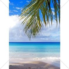Tropical Beach Seascape With Palmtree Leaf © Bluedarkat
