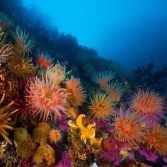 Sous la mer !