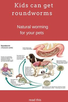 Moms watch out for roundworms in your children,  prevention of worms in dogs remedies,  How to get rid of worms naturally in dogs and cats,  http://bulldogvitamins.blogspot.com/2017/02/spot-worms-in-your-dogs-more-than-90.html