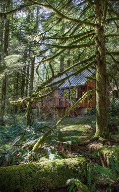 Little Cabin in the Woods by Alene Davis on Flickr.