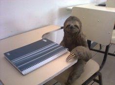 Studious sloth.