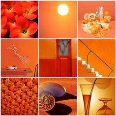 Orange Crush color inspiration