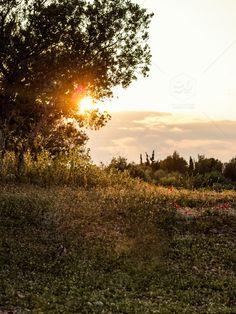 stock photo, nature, tree, sunset, landscape, scenery, beautiful