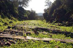 Green rattletrap rails