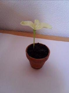 Comment cultiver un citronnier partir de graines facilement dans votre propre maison arbres - Faire pousser un citronnier ...