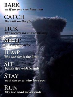 Beautiful dog quote