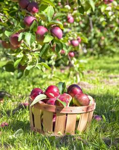 Did You Accidentally Pick 20 Pounds of Apples at the Farm? Let Us Help You With That.