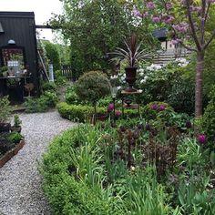 En titt in i min mammas trädgård #garden #trädgård #trädgårdsliv #trädgårdsinspo #gardeninspo #gardendesign #buxbom