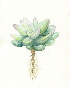 Gemalt mit Verweis aus meiner eigenen Sammlung von Sukkulenten! Ich kann nicht genug von diesen schönen Pflanzen bekommen.  Eine einfache und minimalistische Interpretation ein saftiges, perfekt in einen weißen Rahmen.  ---------------------------------------------------------------------------------------------------------------  Archivabzüge werden ein Leben lang. Sie werden durch professionelle Druckfarbe gedruckt, die lichtbeständige und wasserdicht ist. Gedruckt auf Schwergewicht…