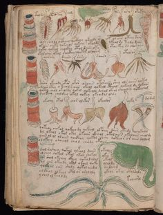 This bizarre medieval manuscript has never been deciphered