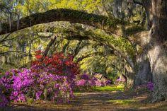 Magnolia Plantation And Gardens Haunted