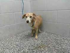 In ISO kennel-injury to leg #A475535 Release date 11/13 I am a female, red and white Welsh Corgi - Pembroke and Labrador Retriever mix. I have been at the shelter since Nov 06, 2014.   City of San Bernardino Animal Control-Shelter. https://www.facebook.com/photo.php?fbid=10203908406928135&set=a.10203202186593068&type=3&theater