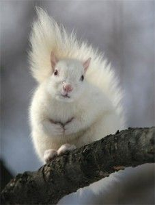 The Magical White Squirrels of Trinity Bellwoods Park, Toronto, Canada. Photo by Michael Werner via his website.