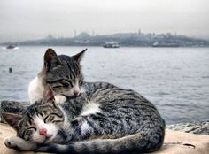 lovely spot to take a nap (Istanbul)