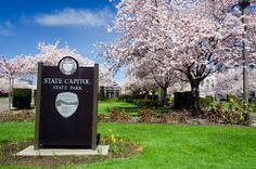 Cherry tree blossoms and a state park sign on the Capitol Mall in Salem. (Photo No. marDB5025)