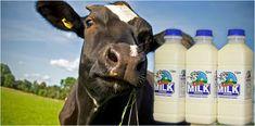 Scottish Milk on Schop We're pleased to announce that Bonaly Farm Dairy whole and semi-skimmed milk Skimmed Milk, Bottle Packaging, Fruit And Veg, Plastic Bottles, Edinburgh, Dairy, Basket, Stuff To Buy