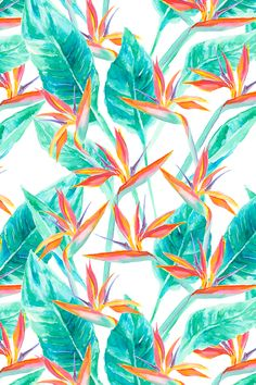 Birds of Paradise by mjmstudio - Hand painted monstera leaves with bird of paradise flowers.  Tropical design on fabric, wallpaper, and gift wrap.