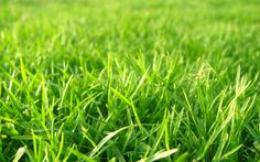 download grass backgrounds