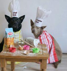 Onze koks