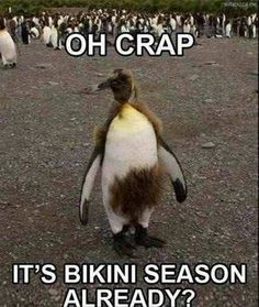 Check out: Animal Memes - Oh crap! One of our funny daily memes selection. We add new funny memes everyday! Bookmark us today and enjoy some slapstick entertainment! Funny Animal Memes, Funny Animals, Funny Memes, Animal Funnies, Funny Captions, Funniest Animals, Talking Animals, Silly Memes, Top Memes