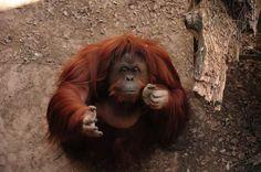 Vídeos mostram as reações de animais que voltaram para seu habitat natural.