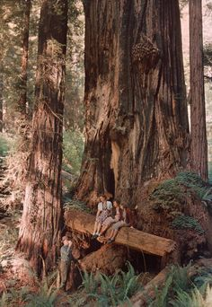 """From the Redwood Forest  """"Such hollow redwoods are called 'goosepens,'"""" said this photo's caption, in a 1939 issue of National Geographic. The nickname refers to the livestock kept in hollowed out trees like this one by American settlers. This particular tree stands in Prairie Creek Redwoods State Park, California."""