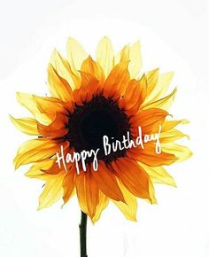 Best Birthday Quotes : Its your BIRTHDAY week! We u so much! Happy Birthday Wishes Cards, Happy Birthday Meme, Happy Birthday Pictures, Birthday Blessings, Happy Wishes, Birthday Week, It's Your Birthday, Birthday Morning, Happy Birthday Sunflower