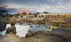 Simply called Serengeti National Park, Tanzania, the remarkable picture is a composite of 50 photographs selected from a total of 2,200 taken by American photographer Stephen Wilkes over 26 hours in the middle of March last year. ...