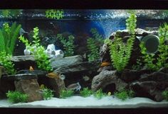Mixed African Cichlid Tank!!!