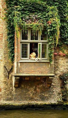 Fidel is the famous dog in Belgium.  I've seen him last year while I was boat riding in river with my peeps. So cute!