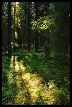 Forest in Köyliö, Western Finland