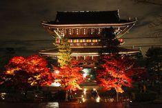 金戒光明寺 黒谷 Kyoto Christmas Tree, Holiday Decor, Places, Home Decor, Teal Christmas Tree, Decoration Home, Room Decor, Xmas Trees, Christmas Trees