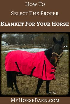 """66/"""" RED 420 Denier Quilted Nylon Winter Horse Blanket by Showman! NEW TACK!!"""