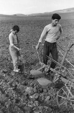 Noi che se aiutavi papa non era sfruttamento del lavoro minorile 1961 L'aratura e la semina Basilicata