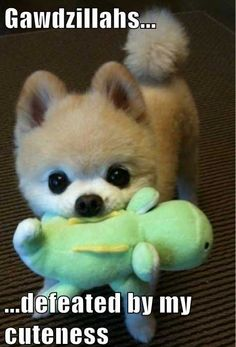 Pom pom's are the CUTEST! I need one!