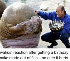 Walrus' reaction to a cake