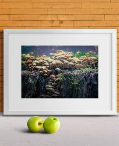 Magic Mushrooms by Tim Abeln Photography and Digital Art Prints. Beautiful wall decoration for your home and office. If gnomes really exist this mushroom colony on top of an old tree stump, hidden deep within the forest, must be their beautiful capital city! #mushrooms #magic #wallart #interiordesign #homedecor #art #fineart #photography