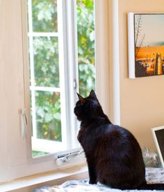 kitty at the window #cats