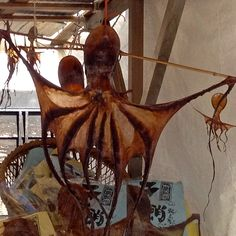 Giant dried octopus! Good to eat!