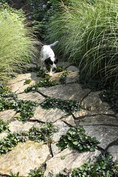 Dog friendly landscape. Great path for down the side of the yard between the ornamental grasses!