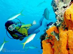 Remarkable Experience with Hawaii Scuba Diving. #scuba-diving #travel #tour #holiday #vacation