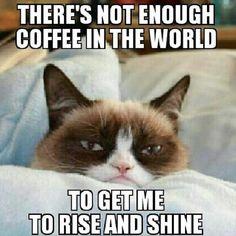 grumpy cat rise and shine