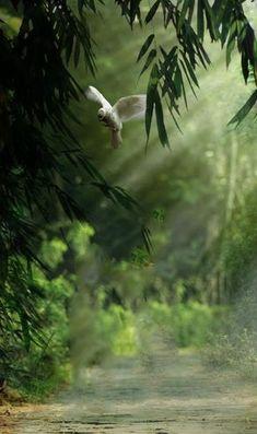 Top 10 Papya Gaikwad background for editing Blur Image Background, Background Wallpaper For Photoshop, Desktop Background Pictures, Blur Background Photography, Best Photo Background, Studio Background Images, Light Background Images, Picsart Background, Photo Backgrounds
