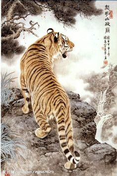 "Draw Tigers Tiger and mountain - In Chinese there's a popular expression ""a tiger who find himself out on flat open plains can be bullied by dogs"" (虎落平阳被犬欺). Tiger is a solitary animal, whereas dogs are pack anim… Japanese Tiger Art, Chinese Tiger, Japanese Tattoo Art, Japanese Prints, Chinese Dragon, Tiger Artwork, Tiger Painting, Tiger Tattoodesign, Tiger Wallpaper"