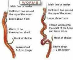How to string a worm on a fishing hook Fishing Fishing tips Fishing gear Fishing hacks Fishing lures bass Fishing Fly Fishing SAltwater Fishing Freshwater Fishing. Fishing Worms, Trout Fishing Tips, Fishing Rigs, Carp Fishing, Saltwater Fishing, Fishing Tackle, Fishing Pliers, Fishing Stuff, Best Fishing Bait
